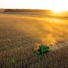 Fall Corn Harvest