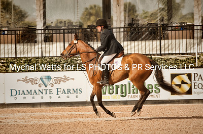 AES Grand Prix of Florida Stallion Grading at Global Dressage