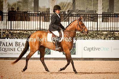 AES Grand Prix of Florida Stallion Grading at Global Dressage