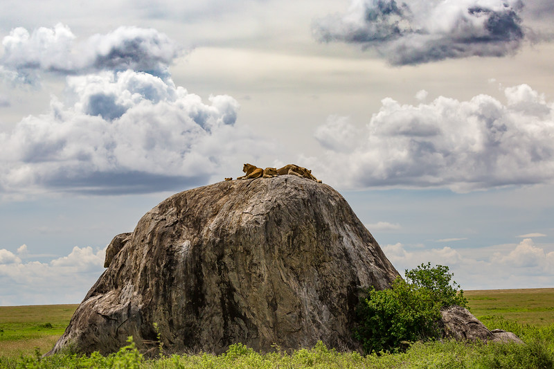 Simba Rock - Serengeti - dramatic clouds-6948
