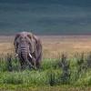 Bull Elephant- Ngorongoro Crater-5938