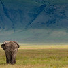 Elephant walking away- Ngorongoro-6183