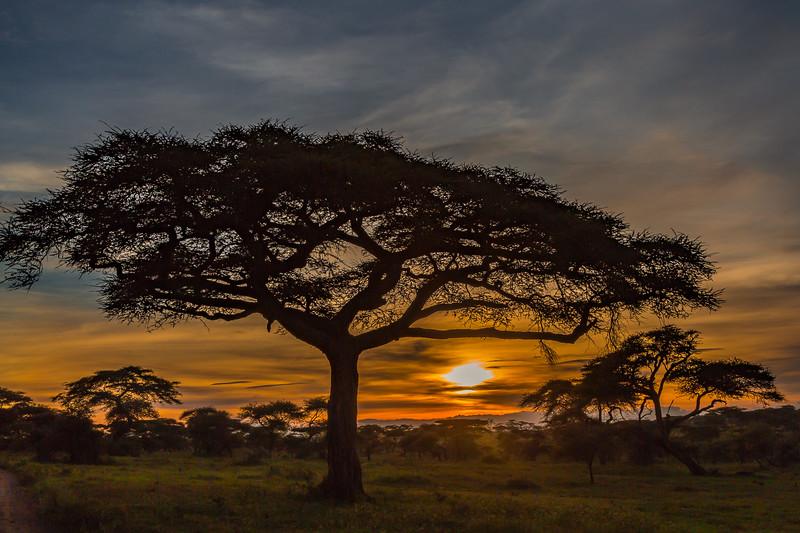sunset and acacia tree - Serengeti-7188