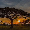 sunset and acacia tree - Serengeti-7188