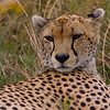 Cheetah - Serengeti - catnapping-7123