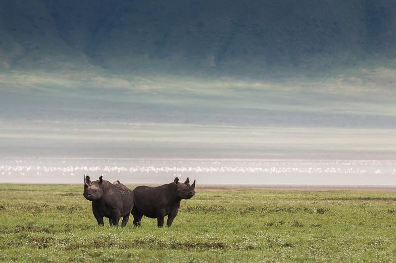 2 Black Rhinos - Ngorongoro-6776