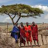 4 Masai men and acacia tree - Serengeti-5434