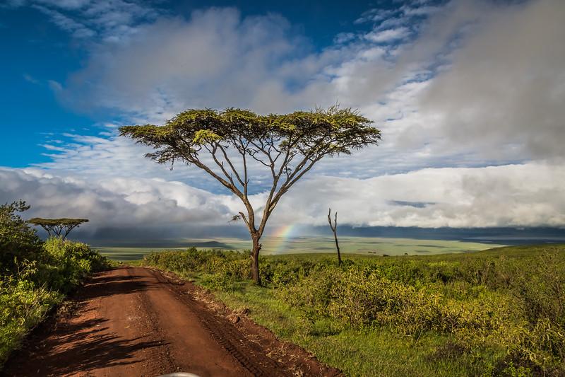 rainbows and acacia tree- Nygoronygoro-5795