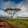 rainbows and acacia tree- Nygoronygoro-5795