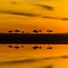 Sunrise - Serengeti-7150