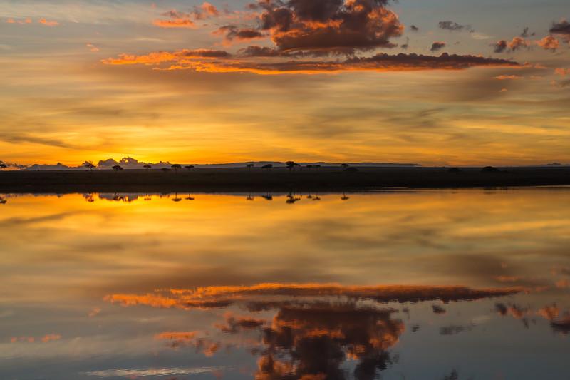 sunrise silhouette 4 - Serengeti-7233