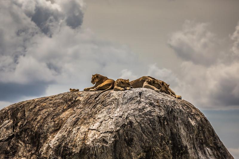 Simba Rock HDR - Serengeti-6950
