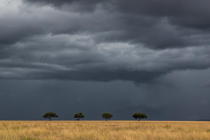 Stormy skies and 4 Acacia trees - Serengeti-7394