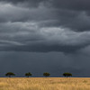 Stormy skies and 4 Acacia trees - Serengeti-7394