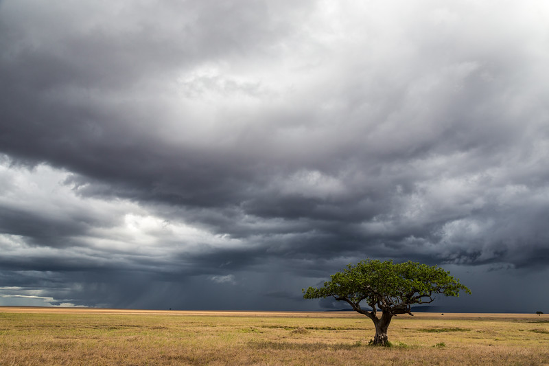 Stormy skies and Acacia tree - Serengeti-7387