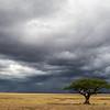Stormy skies and Acacia tree - Serengeti-7387