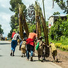 sugar cane on bikes along the road - Uganda-7510