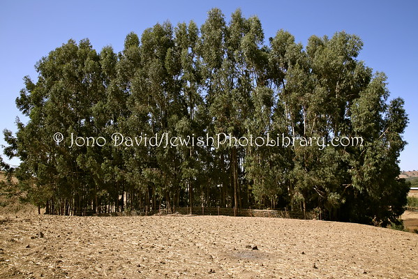 ETHIOPIA, Yekrar (Gondar). Jewish Cemetery (3.2015)