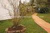 KE 433  Lulav tree