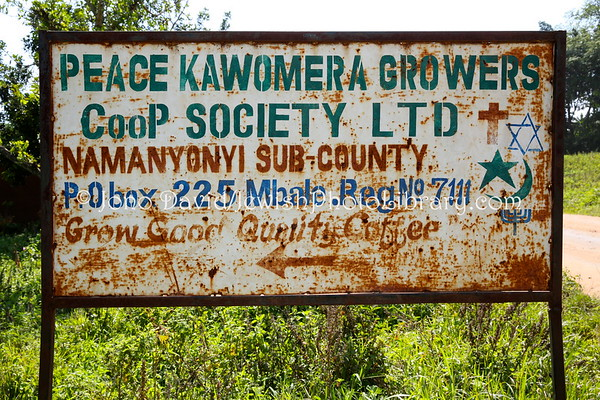 UGANDA, Mbale District, Namanyonyi Sub-country. Peace Kawomera Growers Coop Society. Abayudaya Jews. (8.2013)