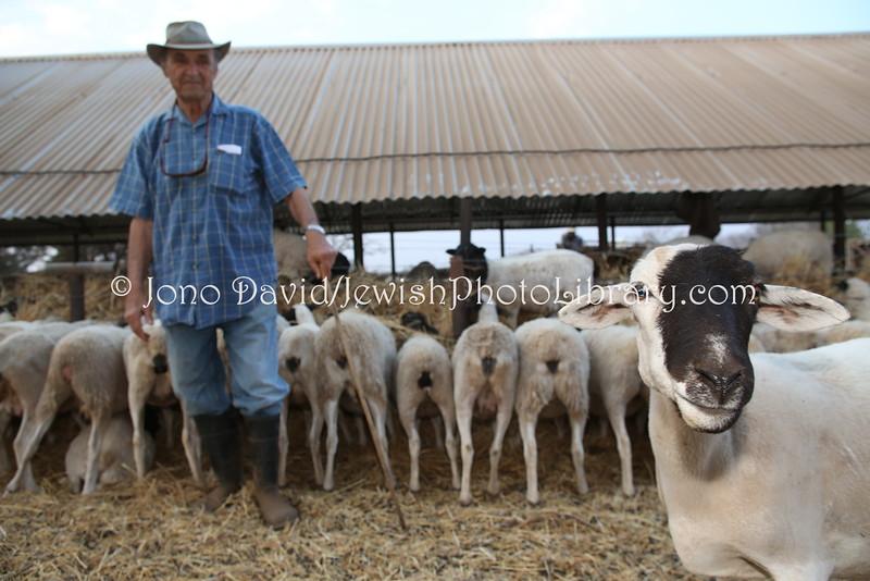 ZW 427  Rubin Pilossof, Ruvale Farm