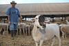 ZW 429  Rubin Pilossof, Ruvale Farm