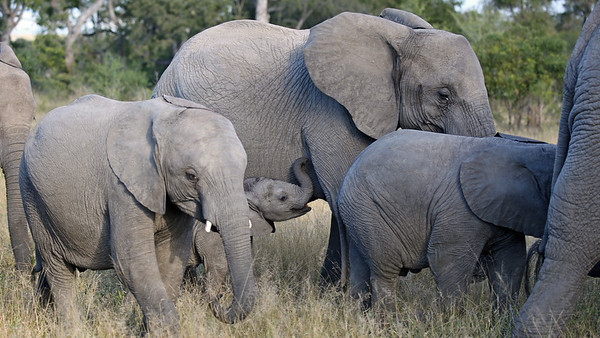 A small baby elephant
