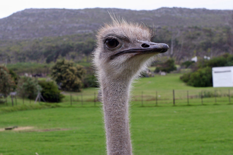 Cape Point Tour - Ostrich Farm