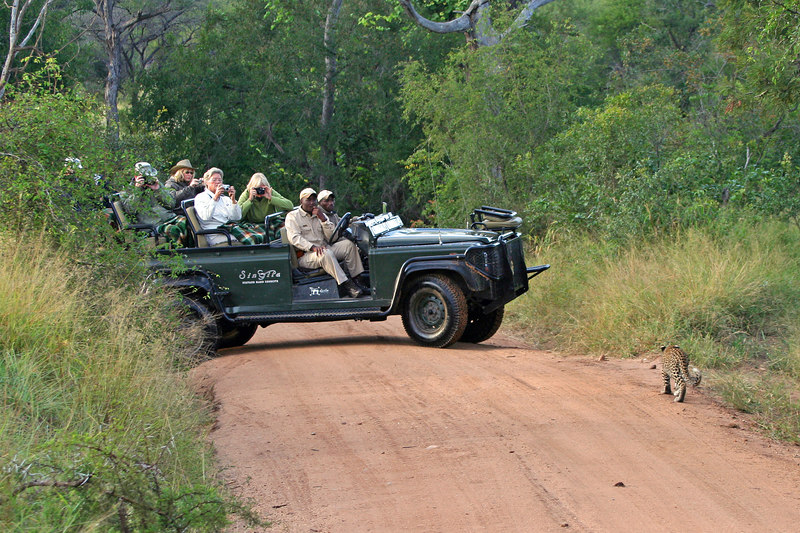 Baby Leopard and Land Rover