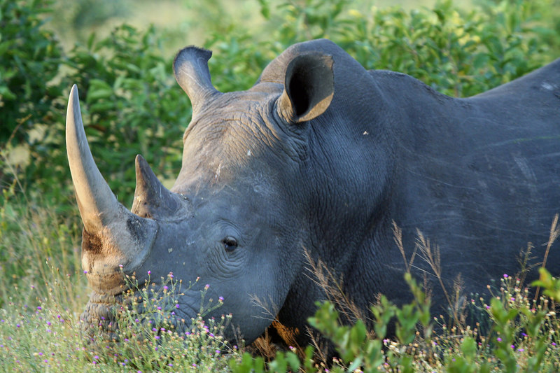Up close and personal with a rhino
