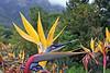 Botanical Gardens - Cape Town