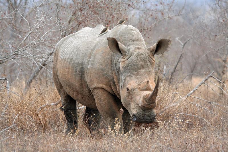 Rhino and friends