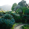 Kirstenbosch National Botanical Garden.