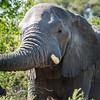 Elephant, Jao Camp, Botswana (2)