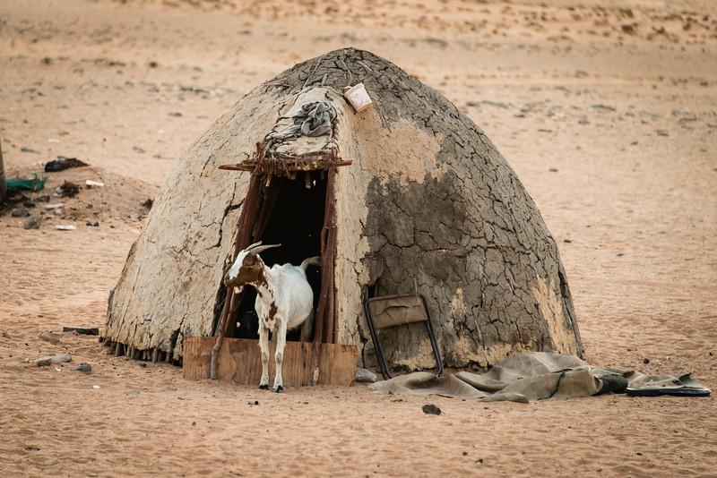 Himba Hut and Goat