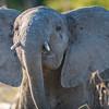 Baby Elephant, Chitabe, Botswana