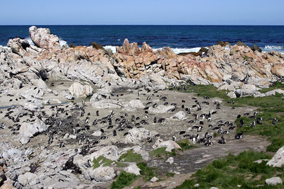 PENGUIN COLONY - WESTERN CAPE, SOUTH AFRICA