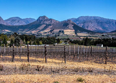 CAPE WINELANDS - SOUTH AFRICA