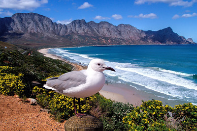 FALSE BAY - SOUTH AFRICA