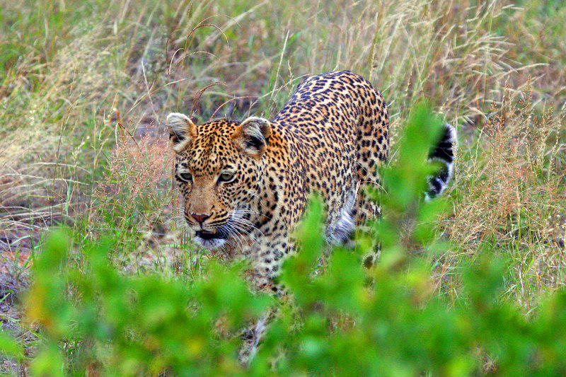 Great Place for Sighting Leopards