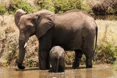 Mother and Baby Elephant, Ngorongoro