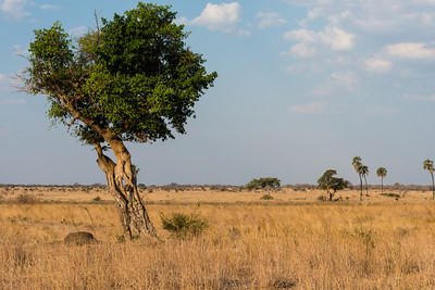 Countryside, Ruaha