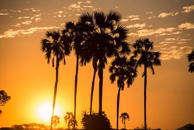 Ruaha Sunset