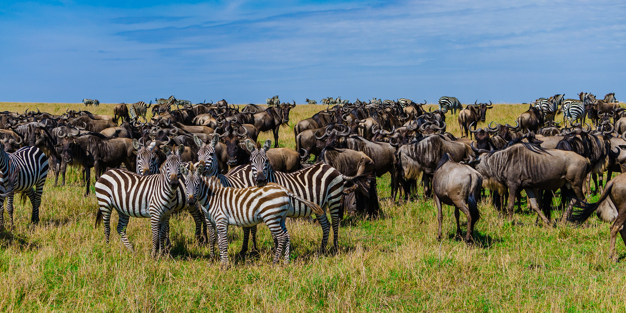 After the Great Migration