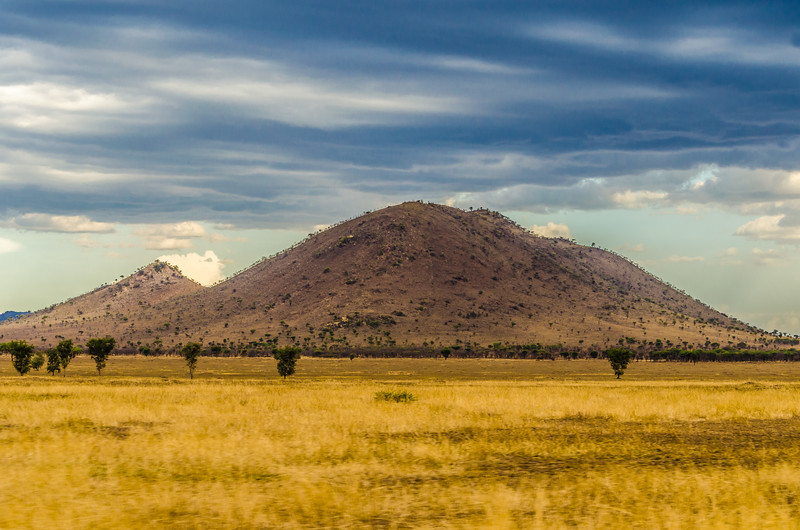 Serengeti Grassland