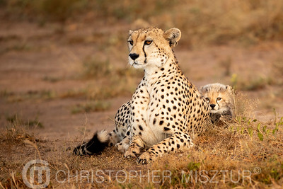 Cheetah and her cub portrait
