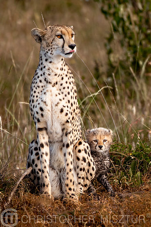 Cheetah and cub portrait