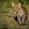 Leopard cub portrait