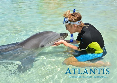 Atlantis-ATLANTIS-Dolphin Encounter Lagoon 1 Pod A-id194655720_withBorder