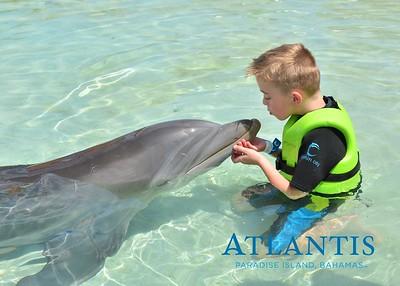Atlantis-ATLANTIS-Dolphin Encounter Lagoon 1 Pod A-id194655729_withBorder